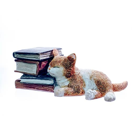 Kitten Sleeping on Books